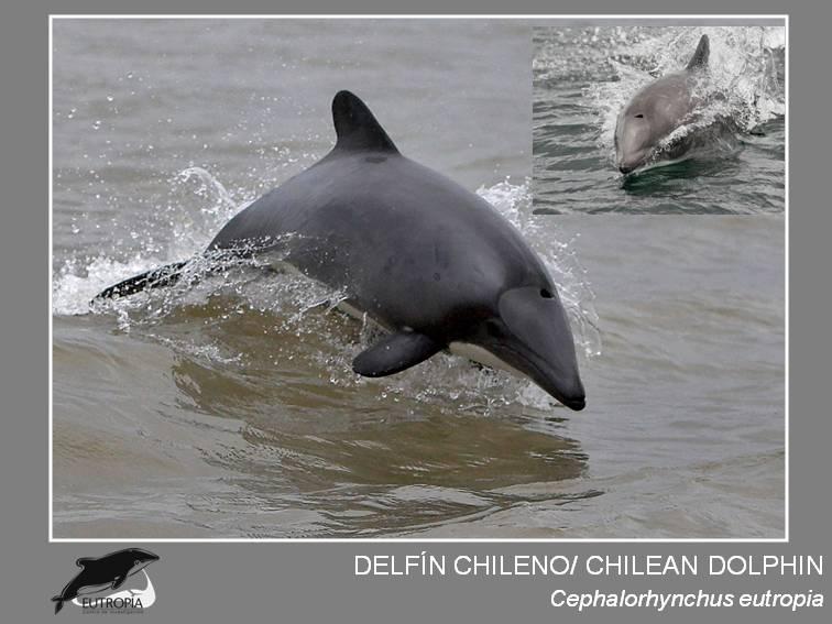 Fotografia imprimir difusion chileno