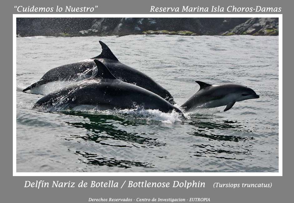 Tursiops Choros Damas